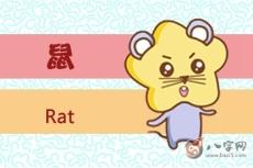 鼠命人命不好的说法是真的吗