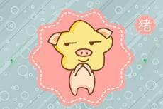 生肖猪在2021年运势稳定 可以备孕生宝宝