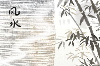 客厅最旺宅的植物 招财旺运的风水绿植